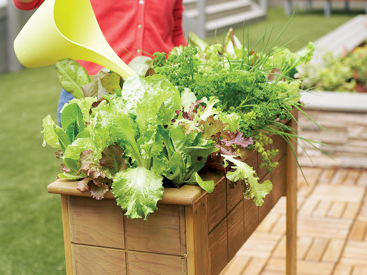 Small Space Salad Box Sunset Magazine