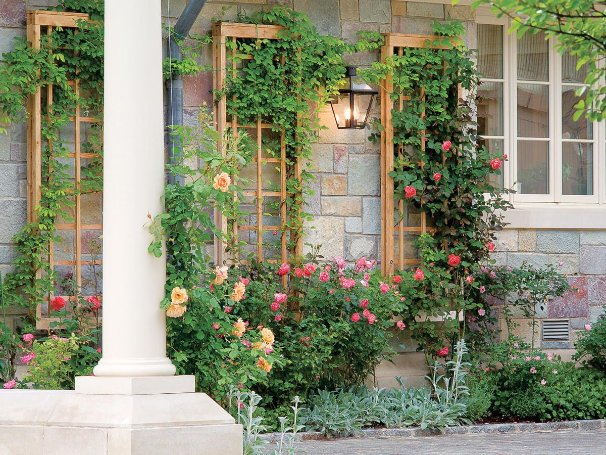 create a leafy eye-catcher for a garden wall - sunset magazine