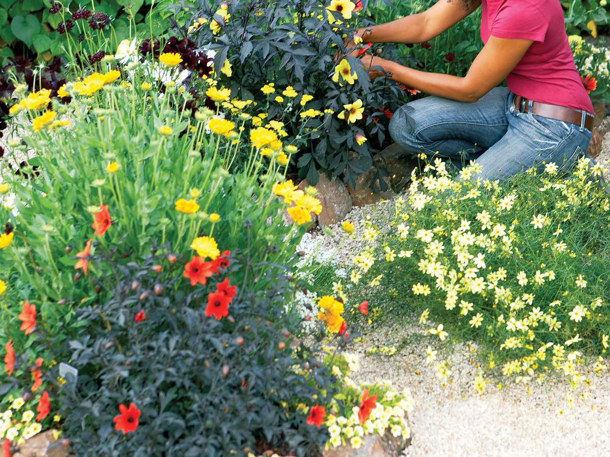 Hot Flower Garden : How to design a hot color flower garden sunset magazine