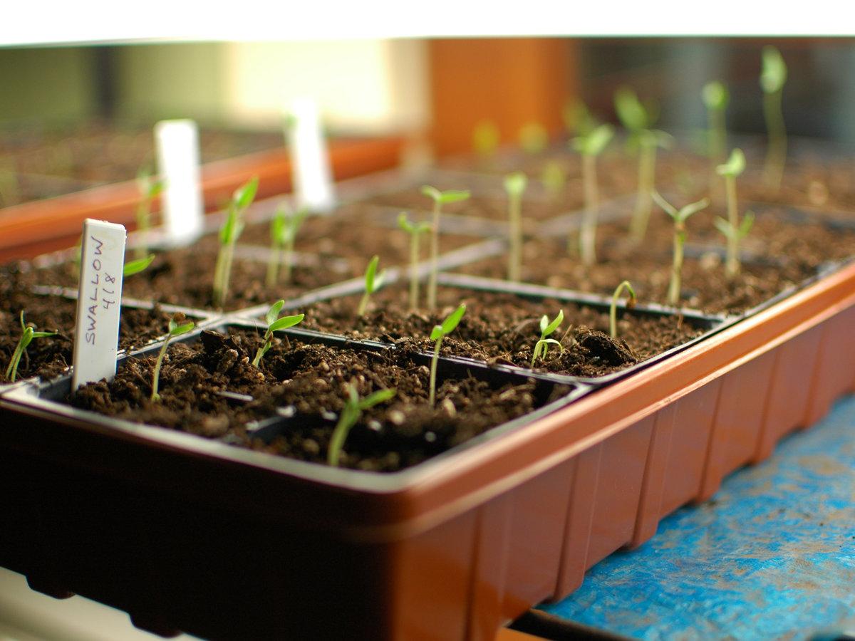 Seed starts
