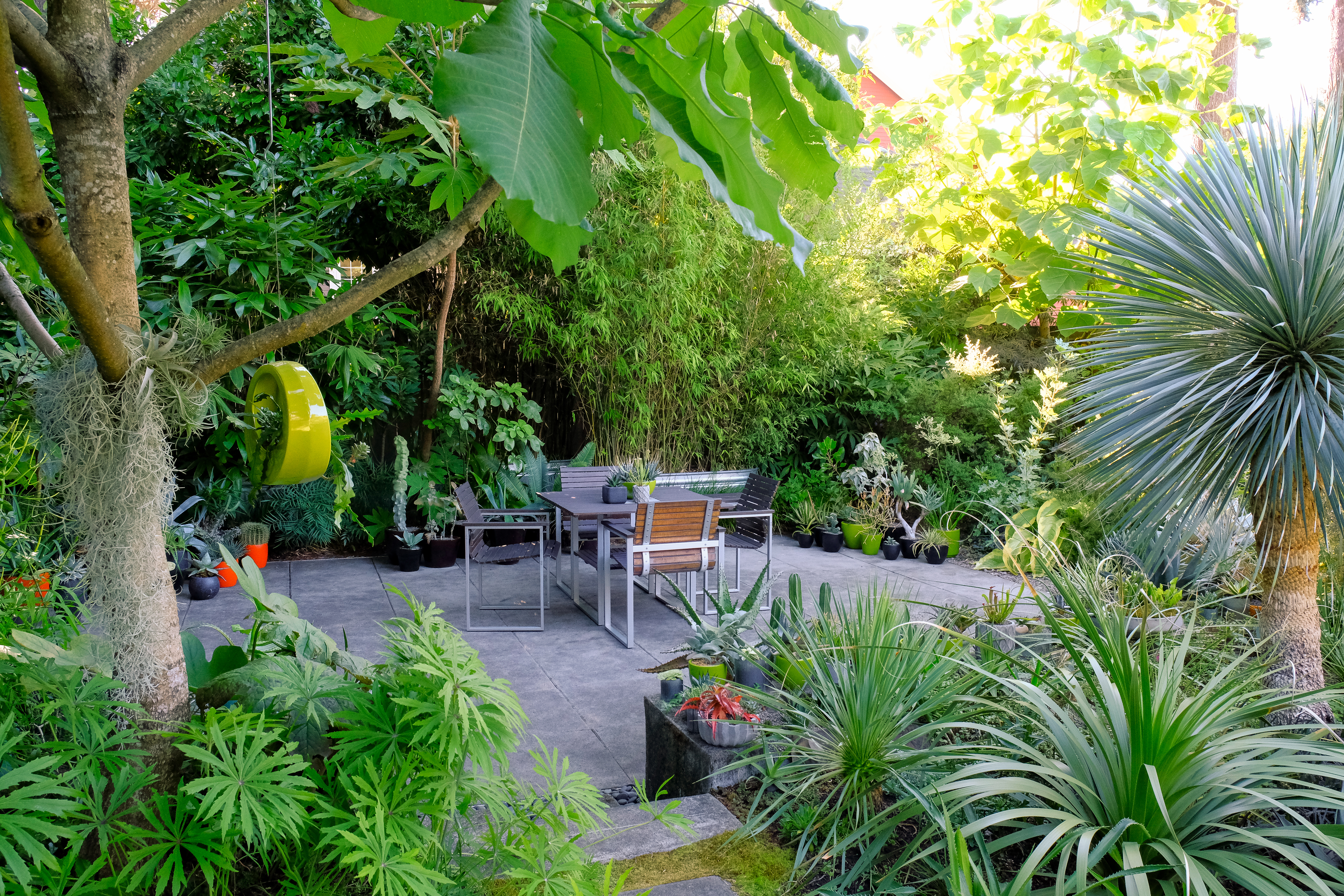 Backyard Revamp