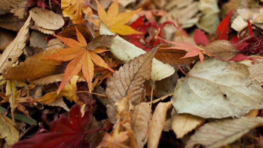 Rake Those Leaves