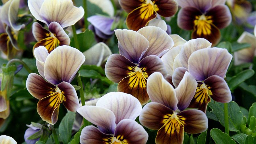 Maximize Flower Power