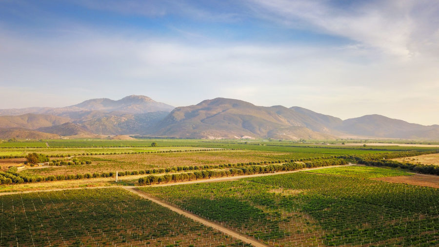 For the Oenophile: Valle de Guadalupe