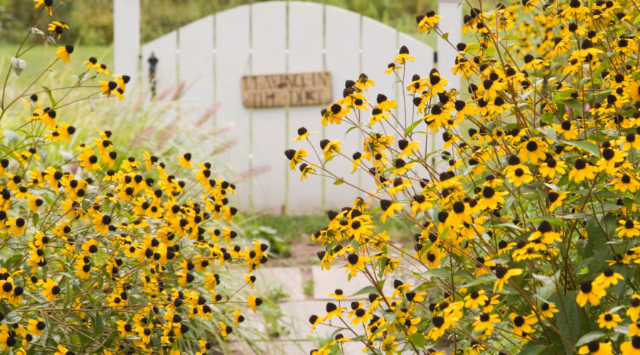 Autumn Flowering Plants Annuals You Ll Fall For Sunset Magazine