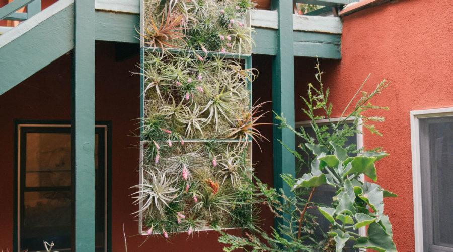 Foliage Framer