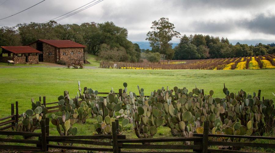 Bask in Jack London's Sonoma Dream