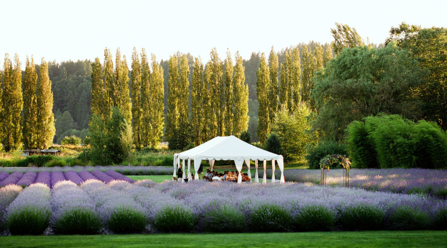 Woodinville Lavender Fields, Redmond, WA