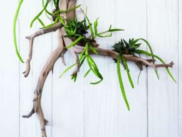 Driftwood Succulents Project