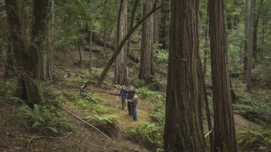 Harold Richardson Redwood Reserve