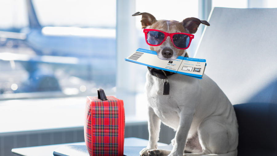 Dog in Airport Terminal