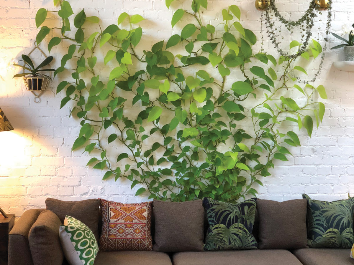 DIY These Vertical Vines for a Living Wall-Type Look