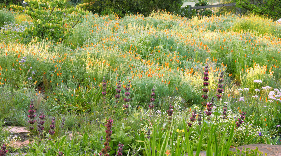 Meadow Garden Design Ideas - Sunset Magazine