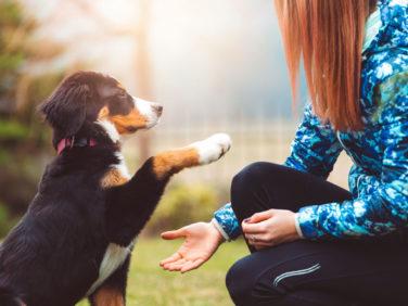 Puppy High-Five