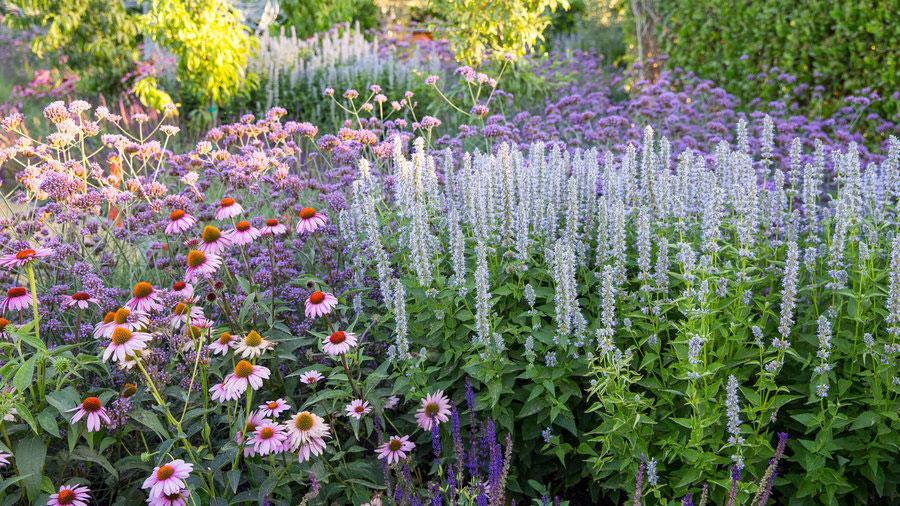 Mediterranean Plants For Your Garden Sunset Magazine