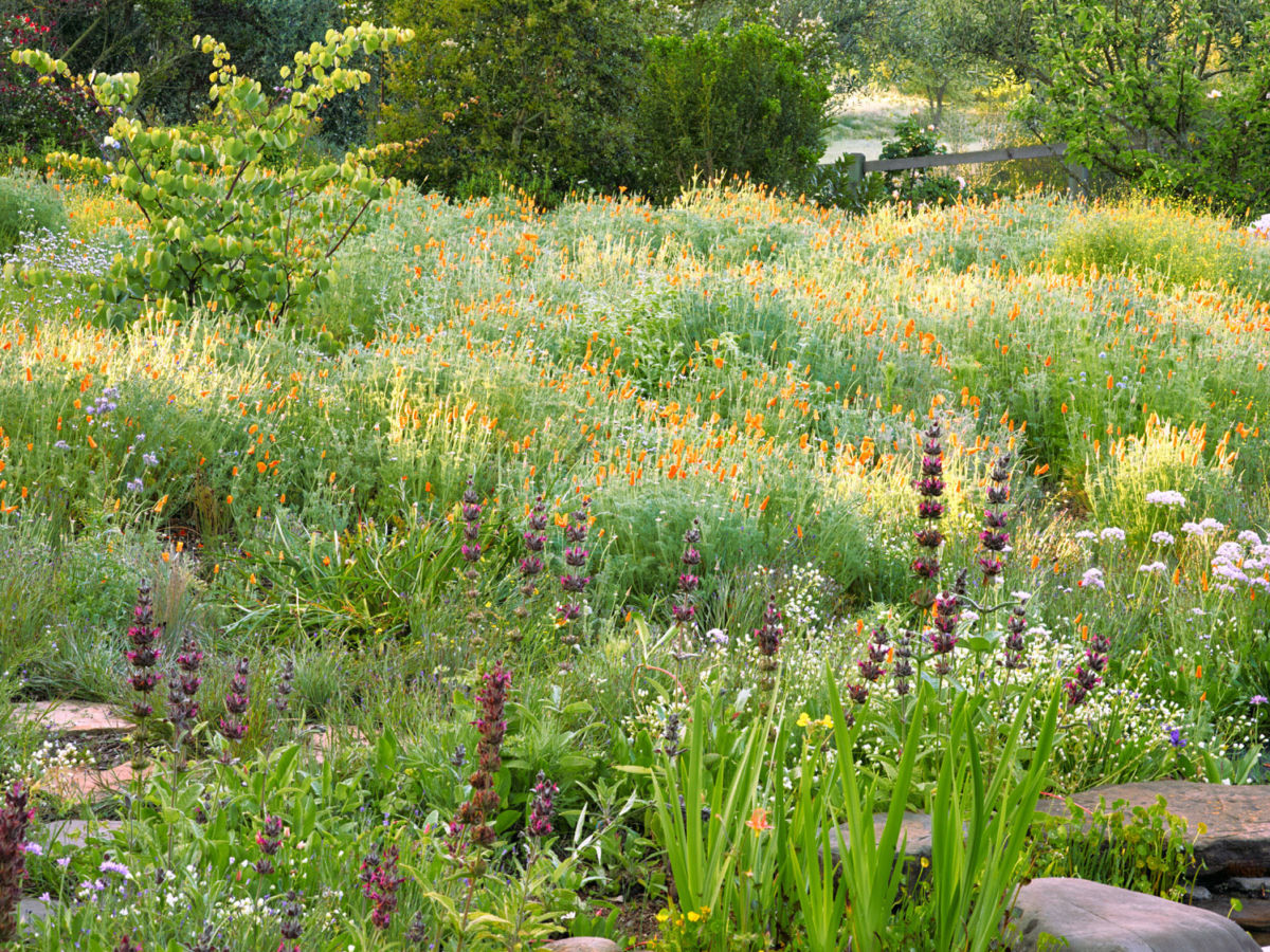 10 Ideas for Designing a Meadow Garden