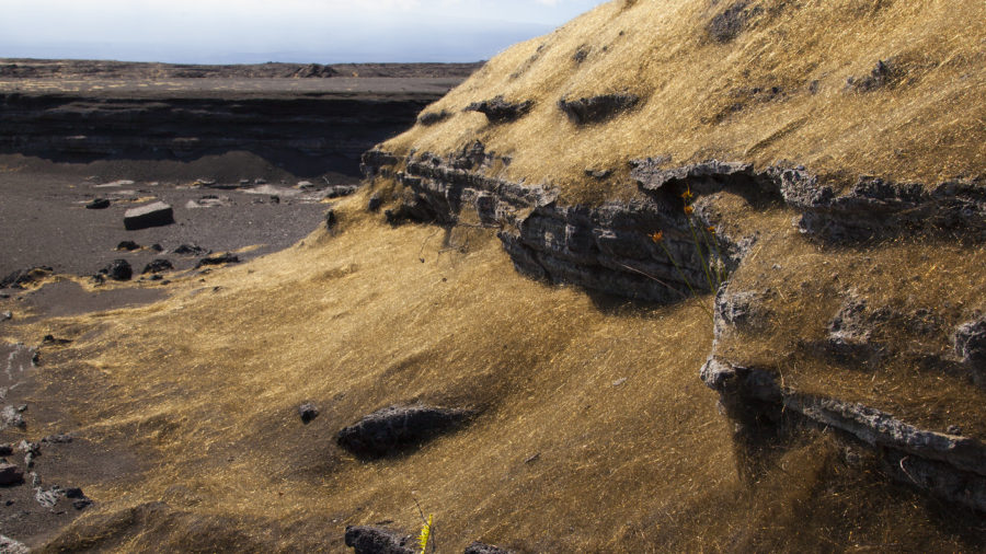 Pele's Hair on the Big Island of Hawaii
