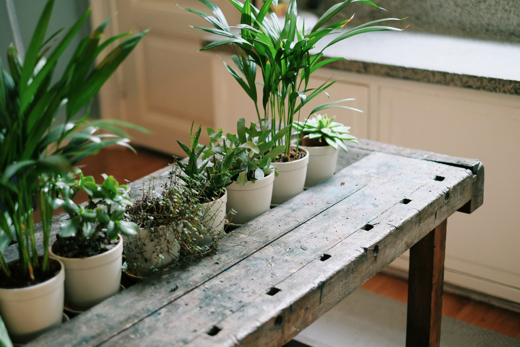 How to Propagate Your Houseplants