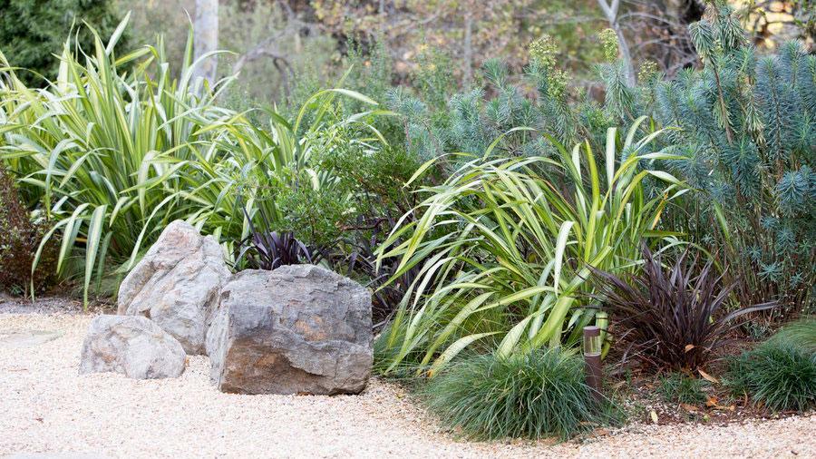 Landscaping Plants For A Modern Garden Sunset Magazine