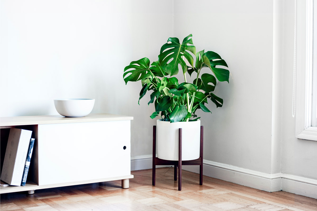 Where to Buy Plants Online and Fulfill All of Your Houseplant #Goals
