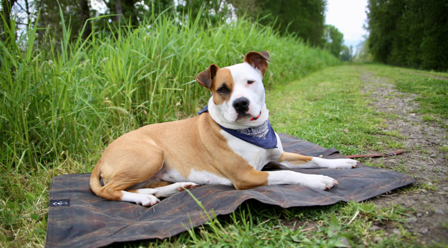 Oregon Tails #Adventuredog Bed Roll